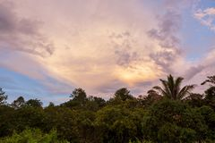 Tropical colorful vibrant sunset clouds and trees. Background royalty free stock photo