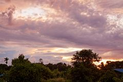 Tropical colorful vibrant sunset clouds and trees. Background royalty free stock images