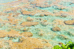 Tropical colors of coral reef, sea and sky Stock Image