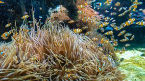 Tropical colour fish and coral reef stock photography