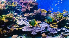 Tropical colour fish and coral reef stock images