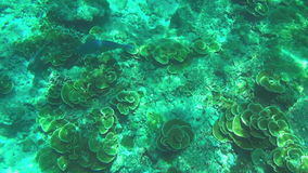 Tropical colourful fishes. Tropical underwater world, Similan Islands Thailand stock video