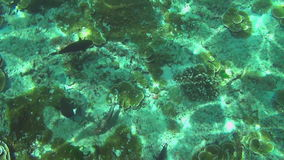 Tropical colourful fishes stock video footage