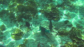 Tropical colourful fishes stock footage