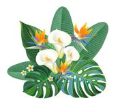 Tropical composition with bird of paradise flowers and calla lily. Vector illustration. Tropical composition with bird of paradise flowers and calla lily Royalty Free Stock Photo