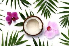 Tropical composition Stock Photos