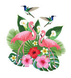 Tropical composition with hummingbirds and flamingos. Vector illustration. Stock Photos