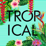 Tropical composition - text, flowers, palm leaves, strips.  Stock Photography