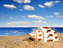 tropical conch shell Royalty Free Stock Image