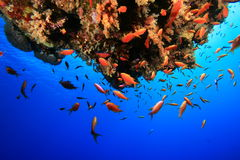 Tropical Coral Reef Royalty Free Stock Photography