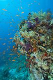 Tropical coral reef Stock Image