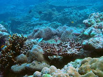 Tropical coral reef. Scenic background of colorful tropical beach underwater off Andaman beach, Thailand royalty free stock photography