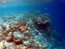 Tropical Coral Reef Aquatic Tortoise. Tropical Coral Reef Aquatic Turtle Stock Photography
