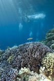 Tropical coral reef in blue water Stock Images