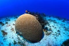 Tropical coral reef Stock Photos
