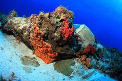 Tropical coral reef Stock Photography