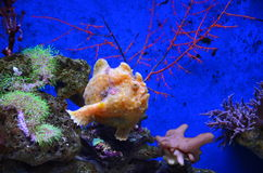 Tropical coral reef fish. In aquarium stock photos