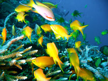 Tropical coral reef fish Stock Photos
