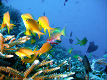 Tropical coral reef fish stock images