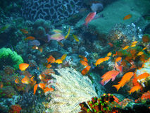 Free Tropical Coral Reef Fish Stock Image - 4494141