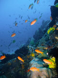Tropical coral reef fish Stock Image
