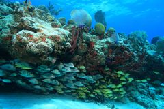 Tropical coral reef and fish Stock Photo