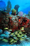Tropical coral reef and fish Royalty Free Stock Photos