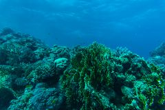 Tropical coral reef and fishes, marine life. Sea or ocean underwater. royalty free stock photo