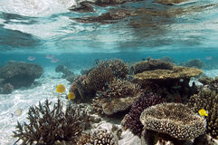 Tropical coral reef - The Maldives stock images