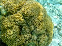 Tropical Coral. Coral Reef in Maldivian Sea Stock Images