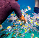 Tropical Coral Reef.Man feeds the tropical fish. Royalty Free Stock Images
