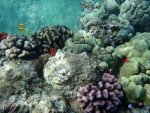 Tropical reef Royalty Free Stock Photography