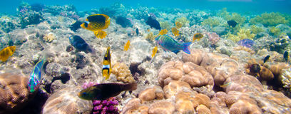 Tropical Coral Reef. Red sea Royalty Free Stock Image