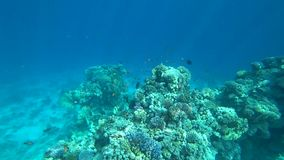Tropical coral reef on Red Sea. Tropical coral reef and fishes on Red Sea stock footage