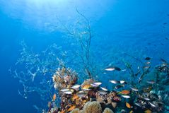 Tropical coral reef scene. Royalty Free Stock Image