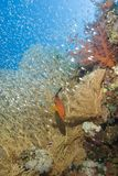 Tropical Coral Reef Scene. Royalty Free Stock Photography