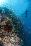 Tropical coral reef scene and scuba divers. Stock Image