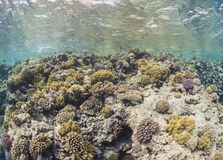 Tropical coral reef scene underwater Stock Photos