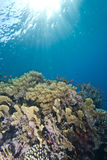 Tropical coral reef  in shallow water. Royalty Free Stock Photos
