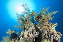 Tropical coral reef in the sun Royalty Free Stock Photo