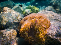 Tropical coral reef in Thailand Stock Images
