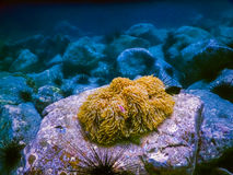 Tropical coral reef in Thailand Royalty Free Stock Photos