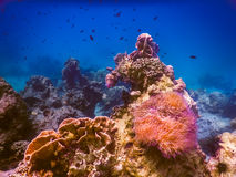 Tropical coral reef in Thailand Stock Image