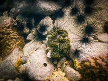 Tropical coral reef in Thailand Stock Photography