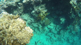 Tropical Coral reef, Underwater shot stock video footage