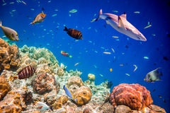 Tropical Coral Reef. Royalty Free Stock Photo