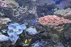 Tropical Corals Stock Image