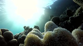 Tropical, The corals and fish. stock video