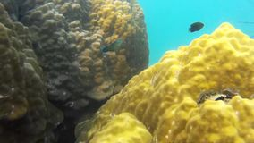 Corals Of Thailand. Tropical Corals Of Thailand under water stock video footage