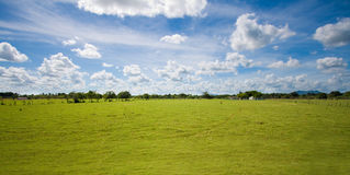 Tropical countryside sky and pasture. Beautiful tropical countryside with lush green pastures and blue cloudy skies stock image